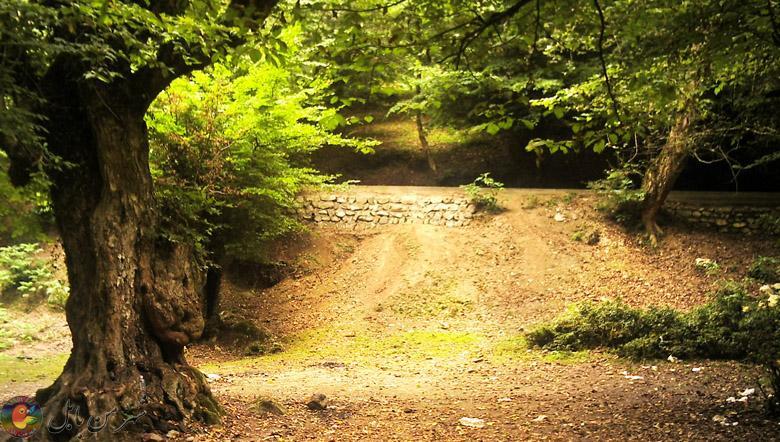 جنگل های بزچفتِ بابلکنار