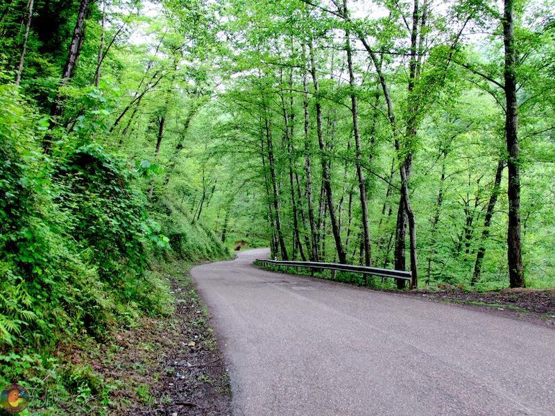 جنگل لفور