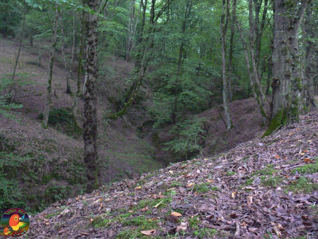 پارک جنگلی بُزچفت در حوالی بابل02(درونکُلا)